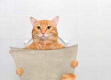 Gato com um jornal em um toalete imagem de stock royalty free