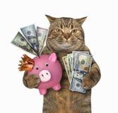Gato com um mealheiro cor-de-rosa fotografia de stock