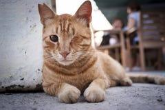 Gato com um olho Imagens de Stock