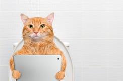 Gato com um PC da tabuleta em um toalete Fotografia de Stock