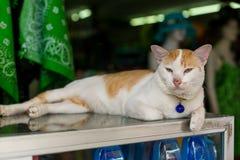 Gato com um pendente Foto de Stock