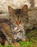 Gato com uma andorinha imagem de stock
