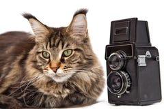 Gato com uma câmera Fotos de Stock Royalty Free