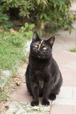 Gato com uma cor engraçada Fotografia de Stock