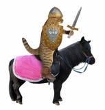 Gato com uma espada em um cavalo preto fotografia de stock
