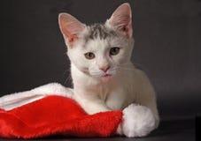 Gato com uma lingüeta cor-de-rosa. Fotografia de Stock