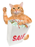 Gato Comprador ventas Foto de archivo libre de regalías