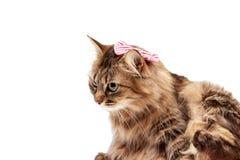 Gato con con un arco rojo imagen de archivo