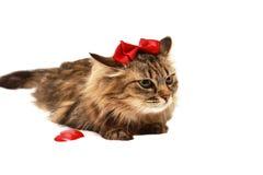 Gato con con un arco rojo en su cabeza Fotos de archivo