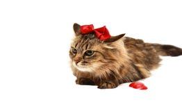 Gato con con un arco rojo en su cabeza Imagen de archivo