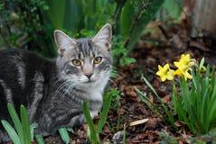 Gato con Dafodils Fotografía de archivo