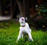 Gato con diversos ojos coloreados fotografía de archivo libre de regalías