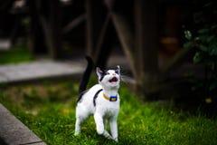 Gato con diversos ojos coloreados imagenes de archivo