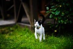 Gato con diversos ojos coloreados fotos de archivo libres de regalías