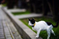 Gato con diversos ojos coloreados imágenes de archivo libres de regalías