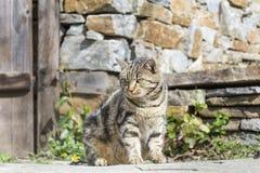 Gato con el acecho de los ojos verdes Fotografía de archivo