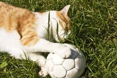 Gato con el balón de fútbol Fotografía de archivo libre de regalías