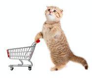 Gato con el carro de compras aislado en blanco Fotografía de archivo libre de regalías