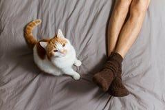 Gato con el dueño en cama Imagen de archivo libre de regalías