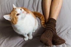 Gato con el dueño en cama Foto de archivo libre de regalías