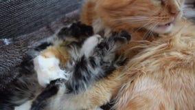 Gato con el gatito almacen de metraje de vídeo