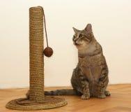 Gato con el juguete Fotos de archivo