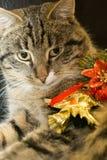 Gato con el juguete del árbol de navidad Foto de archivo