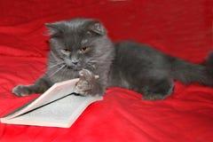 Gato con el libro foto de archivo