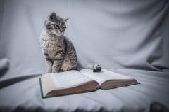 Gato con el libro abierto imagen de archivo