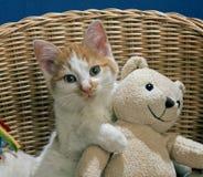 Gato con el oso de peluche Fotos de archivo libres de regalías