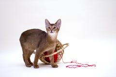 Gato con el ovillo y la cesta Imagenes de archivo