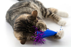 gato con el sombrero del partido fotografía de archivo