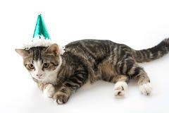 gato con el sombrero del partido foto de archivo libre de regalías