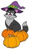 Gato con el sombrero y las calabazas Fotografía de archivo