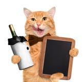 Gato con el vino foto de archivo