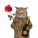 Gato con el vino y una rosa 2 fotos de archivo