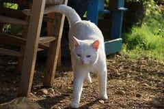 Gato con Heterochromia en el jardín Imagen de archivo