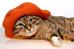 Gato con la boina anaranjada Fotografía de archivo