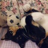 Gato con la bola Fotografía de archivo libre de regalías