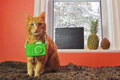 Gato con la cámara lista por vacaciones tropicales Foto de archivo libre de regalías