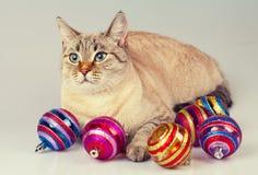 Gato con la decoración de la Navidad Fotos de archivo libres de regalías