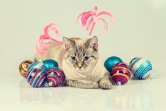 Gato con la decoración de la Navidad Fotografía de archivo