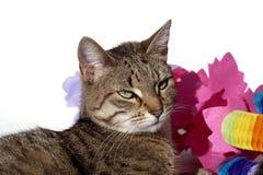 Gato con la decoración del partido Fotografía de archivo libre de regalías