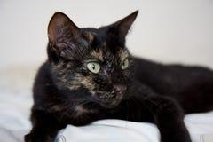 Gato con la profundidad del campo baja Foto de archivo
