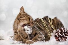 Gato con las decoraciones de la Navidad Imágenes de archivo libres de regalías