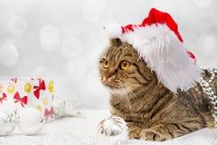Gato con las decoraciones de la Navidad Fotografía de archivo libre de regalías