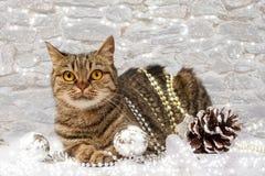 Gato con las decoraciones de la Navidad Foto de archivo