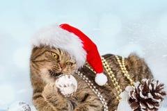 Gato con las decoraciones de la Navidad Fotografía de archivo