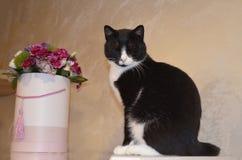 Gato con las flores Foto de archivo