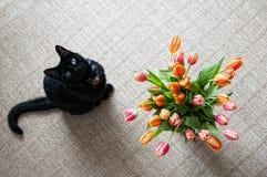 Gato con las flores Imagen de archivo